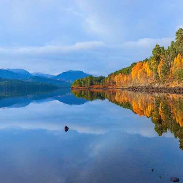Rewilding the Scottish Highlands