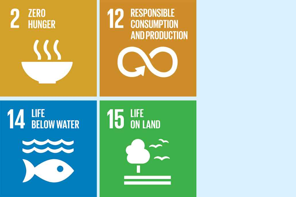 2. Zero hunger 12. Responsible consumption and production 14. Life below water 15. Life on land