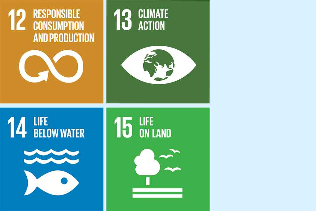 12. Responsible consumption and production 13. Climate action 14. Life below water 15. Life on land