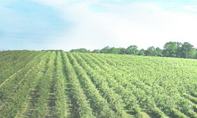 Brambletye Farm